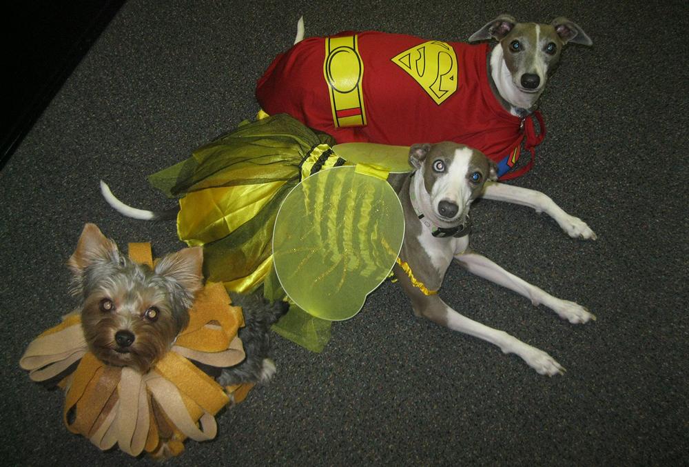 CSC Halloween Mascots